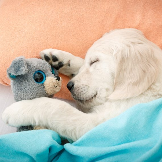 staycation suites for dogs