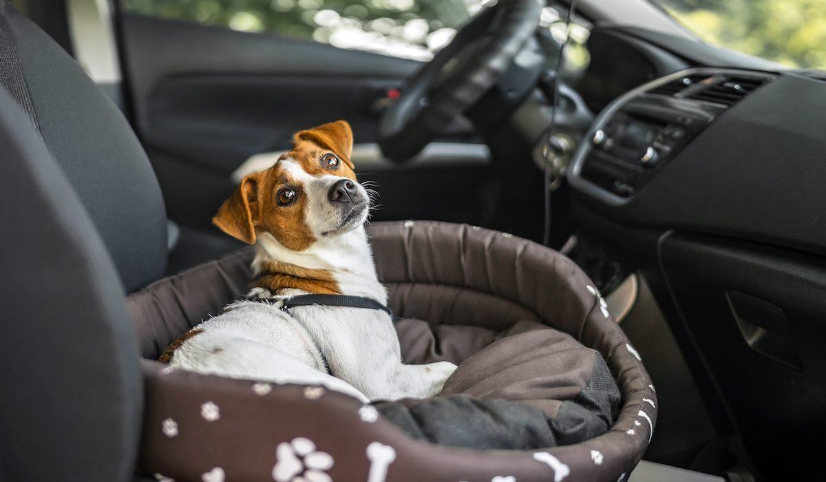 dog car seats