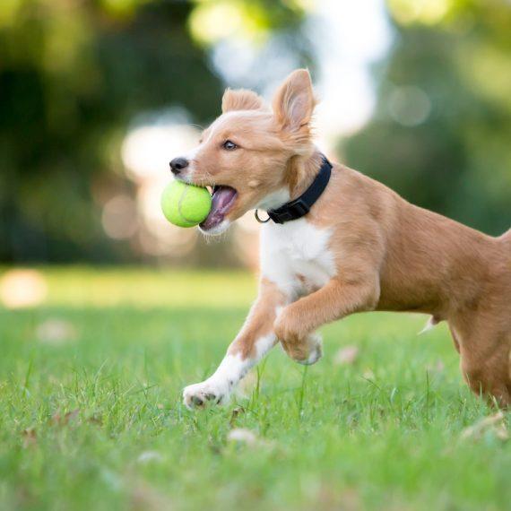 dog bark meaning