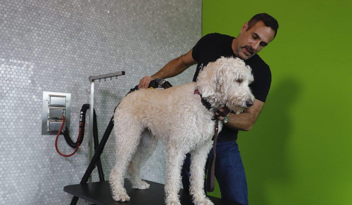 self dog grooming stations
