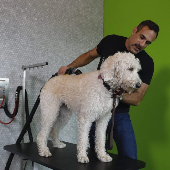 self dog grooming stations