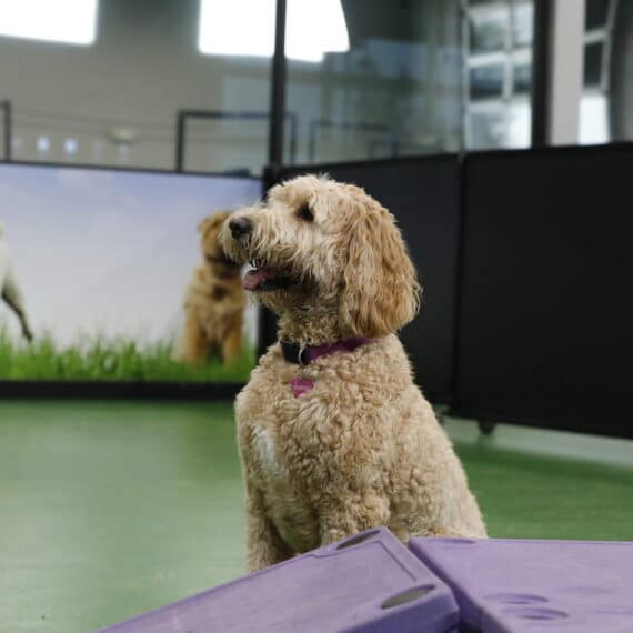 dogs benefit from daycare