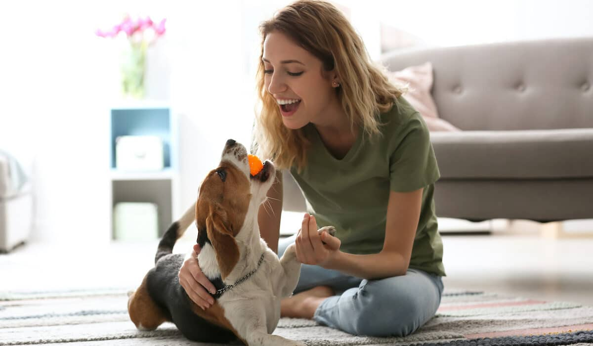 Can Dogs Lower Your Stress Level