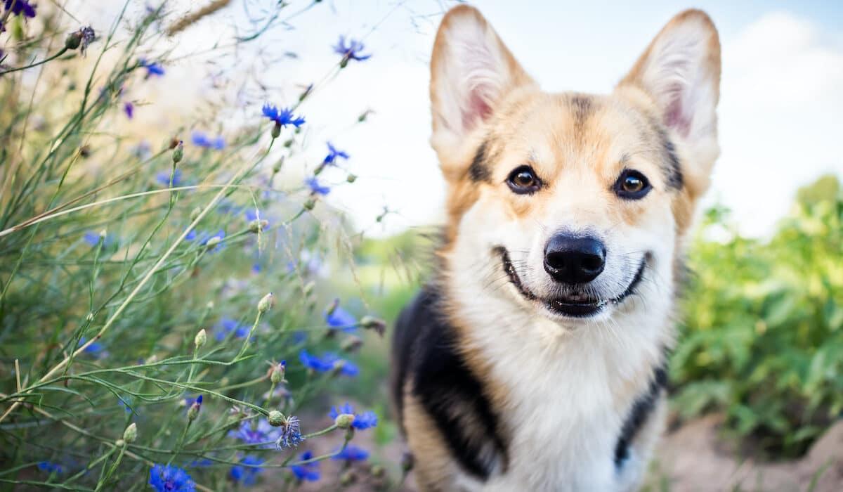 Dog summer
